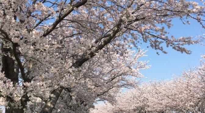 春のオススメスタイル!